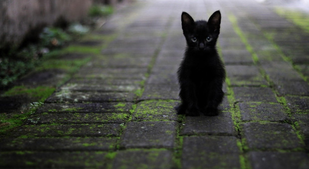 Dzień uznania dla czarnego kota