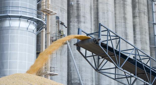 UE nałożyła cła przywozowe na kukurydzę, sorgo i żyto