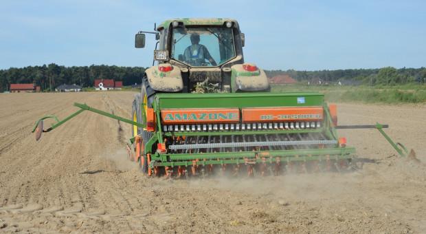 Termin siewu i ilość wysiewu nasion rzepaku