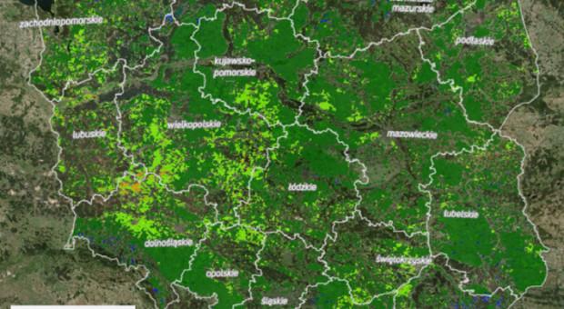 Geoserwis wsparciem w szacowaniu strat spowodowanych przez suszę