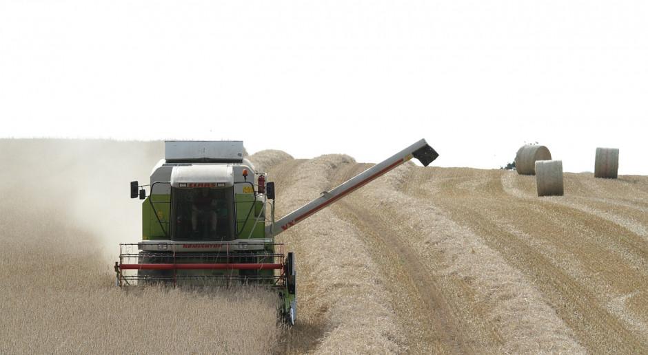 DBV: Zbiory zbóż i rzepaku w Niemczech poniżej średniej