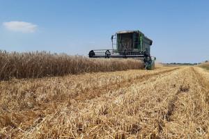 A Wy jak podsumujecie sezon dla zbóż 2019/2020?