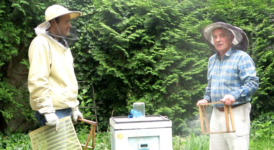 Pasieka przy domu: Transport bezpieczny dla pszczół i pszczelarza