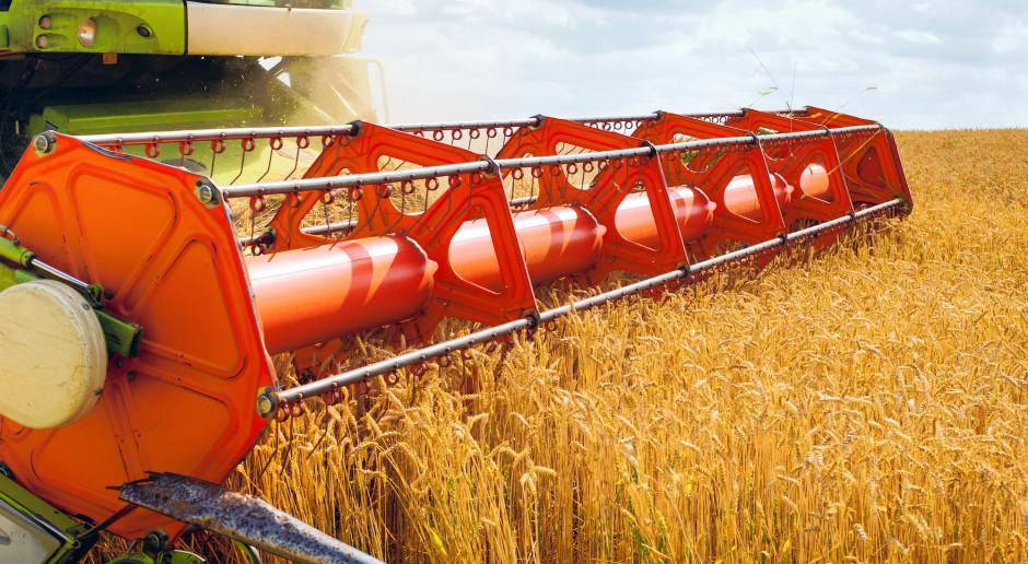 Znaczny wzrost ceny pszenicy na paryskiej giełdzie