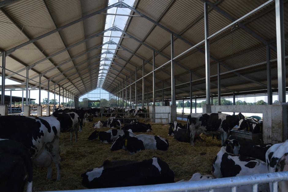 Wgospodarstwie jest prowadzona produkcja zwierzęca. Stado krów mlecznych to 600sztuk bydła utrzymywanego wnowoczesnej oborze zkaruzelową halą udojową