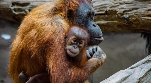 Zwierzęta uczą się poprzez obserwację