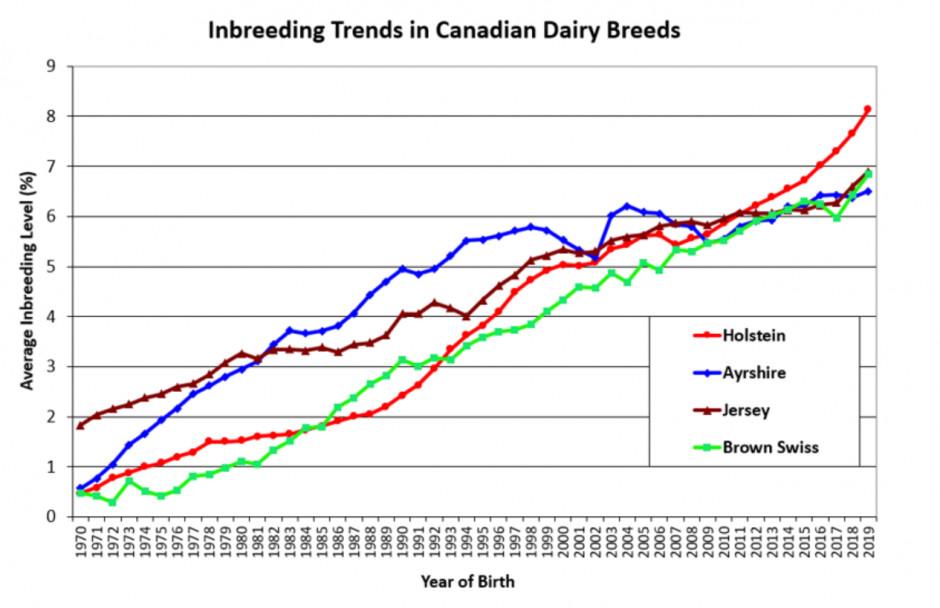 Wzrost poziomu inbredu w kanadyjskiej populacji bydła mlecznego z podziałem na rasy, źródło: Lactanet Canada.
