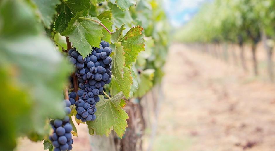 Informacja dla wyrabiających wino
