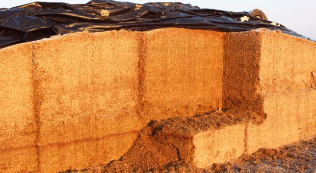 Czynniki warunkujące jakość kiszonki zkukurydzy