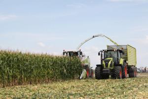 Im wyżej koszona kukurydza, tym wyższa jej jakość izawartość energii