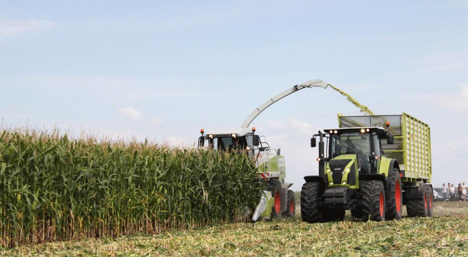 Niedobór kiszonki z kukurydzy powracającym problemem