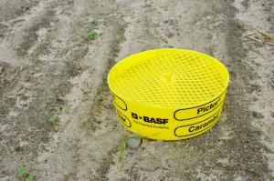 Zaprawy insektycydowe tylko częściowo chronią przed szkodnikami, m.in. śmietką kapuścianą, dlatego odwrześnia dolistopada koniecznie musimy prowadzić obserwację żółtych naczyń. Ustawiamy jeod brzegów pól, odwszelkich zadrzewień. Kontrolę naczyń prowadzimy regularnie (zwłaszcza wczasie nalotów szkodników co3dni), najlepiej wzbliżonych godzinach, np. wpołudnie. Pamiętamy ouzupełnianiu wody zpłynem wnaczyniu.