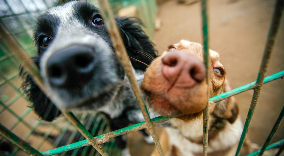Mimo pandemii ponad 2900 zwierząt ze schroniska na Paluchu w 2020 r. znalazło nowy dom