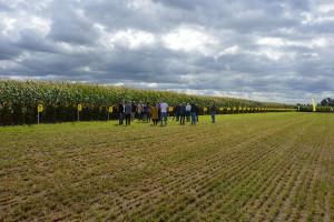Nowe odmiany kukurydzy HR Smolice