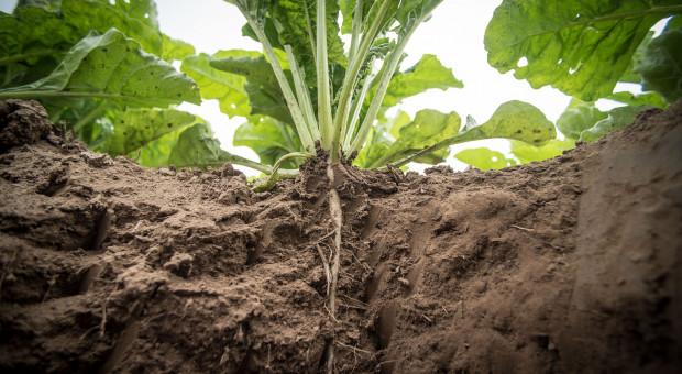 Czy rolnikom potrzebna jest wiedza o wigorze nasion roślin?