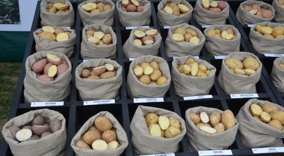 Jakich plonów ziemniaka możemy się spodziewać w tym sezonie?
