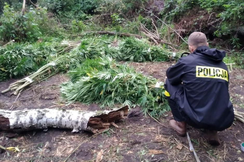W lesie pod Tuszynem funkcjonariusze ujawnili dwie plantacje konopi, Foto: Policja