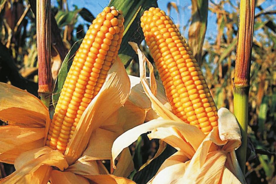 Polski robot będzie siał, pielił i monitorował stan kukurydzy