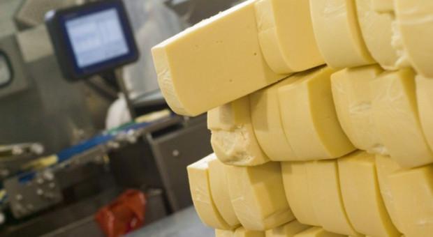 Ranking 20 największych mleczarni świata