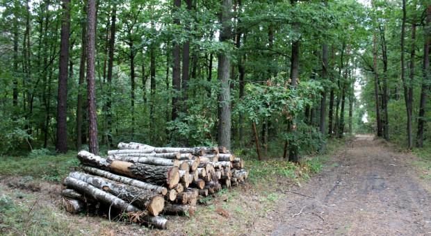 Przyłapani na kradzieży drewna z lasu