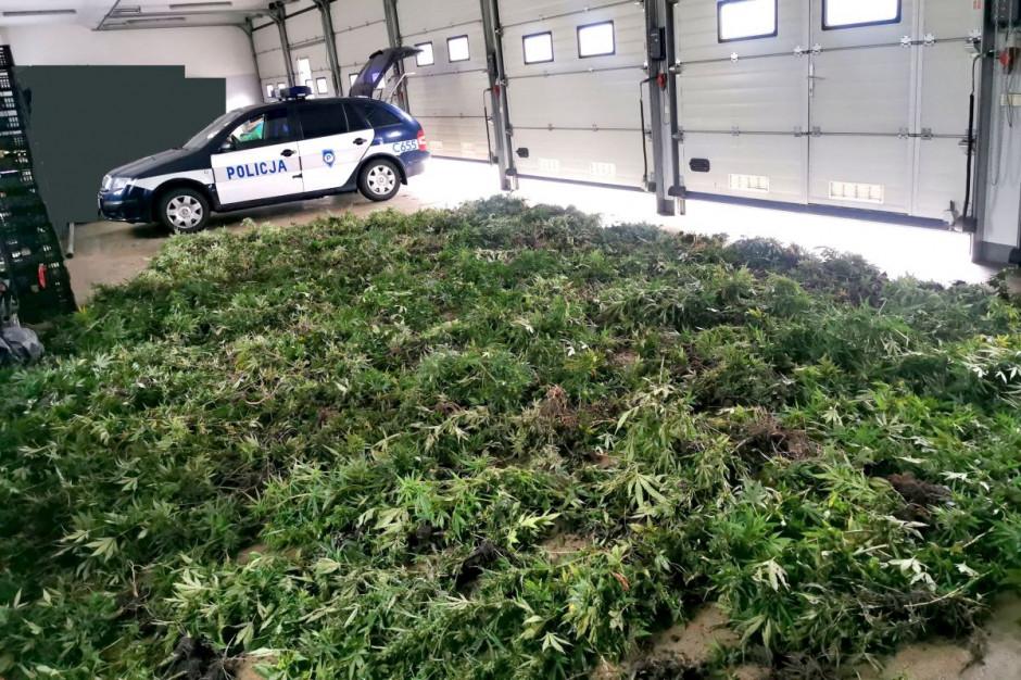 Na plantacji rosło prawie półtora tysiąca krzewów, zdjęcia: Policja