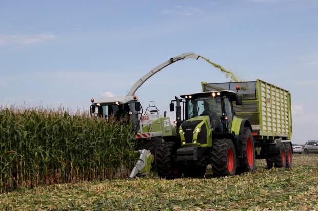 5 kroków do przygotowania dobrej kiszonki z kukurydzy