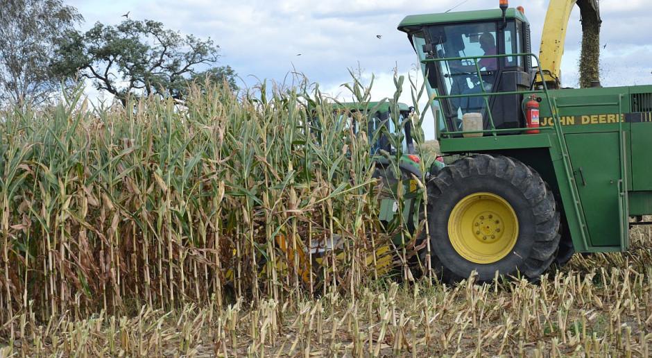 KE: Wrześniowa prognoza plonowania roślin uprawnych w 2021 r. w UE