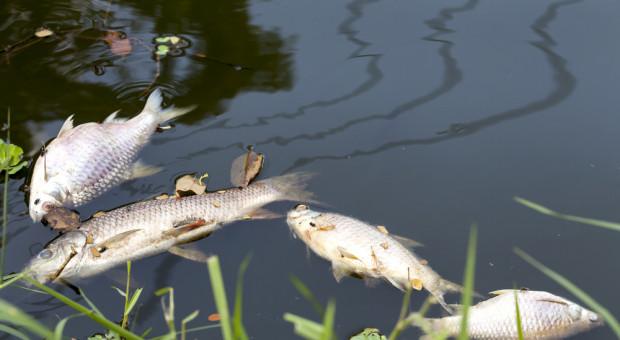 Znaleziono 10 kg śniętych ryb nad Wisłą w pobliżu Łomianek