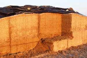 Kluczowe znaczenie dla jakości i wartości pokarmowej uzyskanej kiszonki ma wysokość koszenia roślin