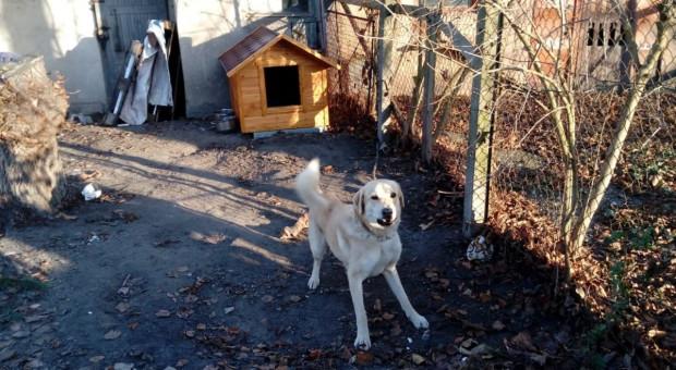 Moskal: Rada przy MSWiA zapewni stałe miejsce w administracji dla spraw ochrony zwierząt