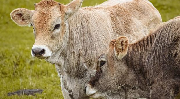 """Kosiniak-Kamysz: zaproponujemy """"piątkę dla środowiska"""", będą też poprawki do projektu ws. zwierząt"""