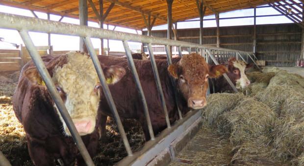 """Rolnicy o """"piątce dla zwierząt"""": Czy tam ktoś myśli?"""