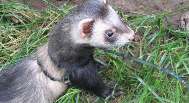 Solidarna Polska, część PSL i Konfederacja za odrzuceniem projektu PiS zmian w ustawie o ochronie zwierząt