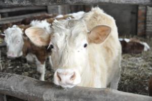 Kowalski: SP nie poprze projektu zmian w ustawie o ochronie zwierząt w obecnym brzmieniu