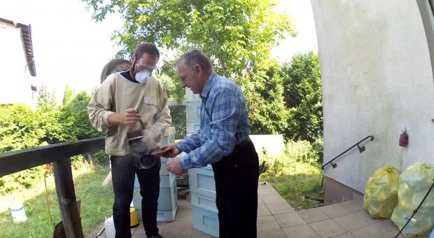 Pasieka przy domu: Walczymy z motylicą