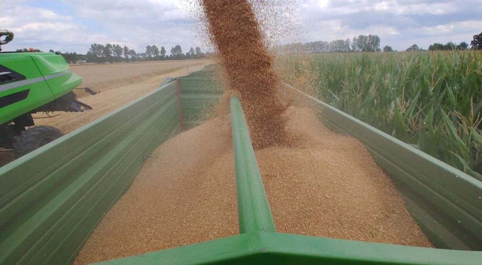 W tym roku zbierzemy ponad 33 mln ton zbóż!