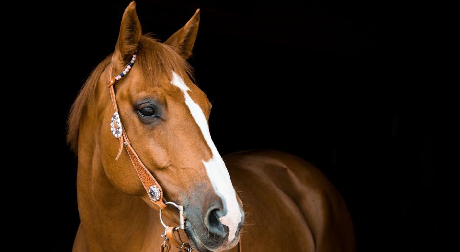 MRiRW: sukces arabskich koni polskiej hodowli podczas championatu w Pradze