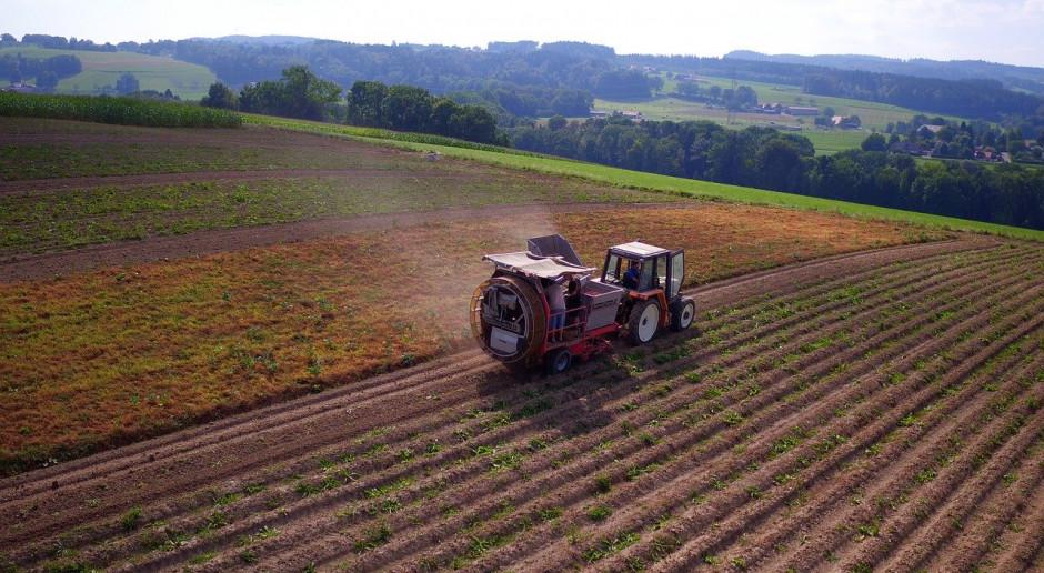 UE: Rynek ziemniaków w kryzysie