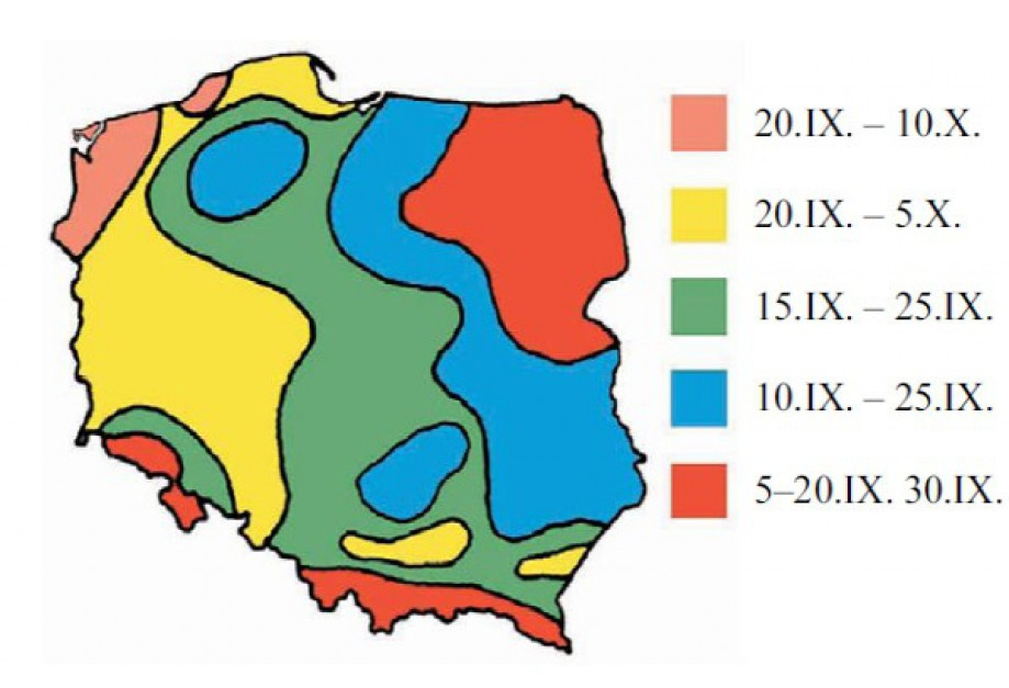 Optymalne terminy siewu pszenżyta. Źródło: IUNG PIB