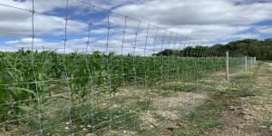 Nowy typ ogrodzenia przeciw zwierzynie marki Agrofence; fot. mat. prasowe