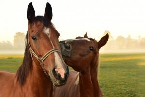 Jurgiel o konieczności zmian w stadninach koni