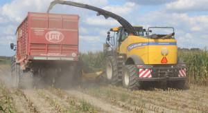 Ceny zbioru kukurydzy na kiszonkę w sezonie 2020