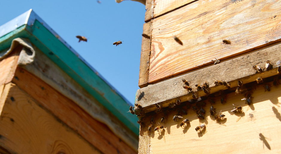 Wielkopolskie: 2 mln zł od samorządu regionu na zakup pokarmów dla pszczół