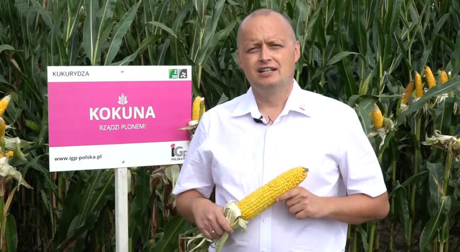 Kukurydza Premium IGP POLSKA