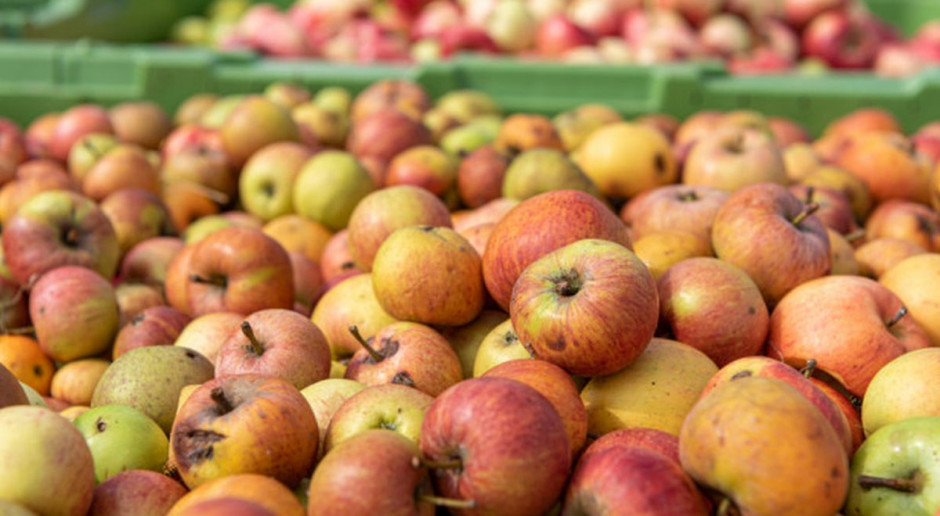 Analiza: Niskie ceny jabłek przemysłowych