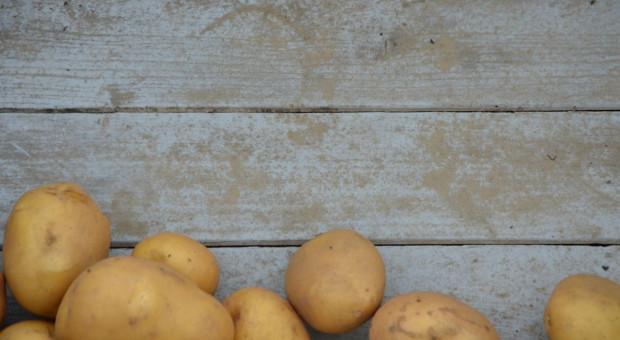 Zwiększa się koncentracja uprawy ziemniaka