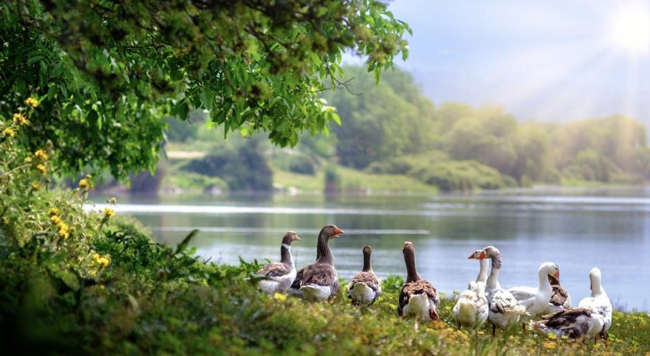 Ostrzeżenie przed grypą ptaków