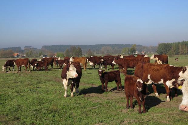 Zarzecki: Chcemy normalnej możliwości rozwijania naszych gospodarstw
