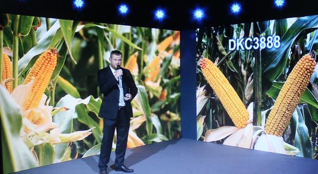 3 nowe odmiany kukurydzy marki Dekalb