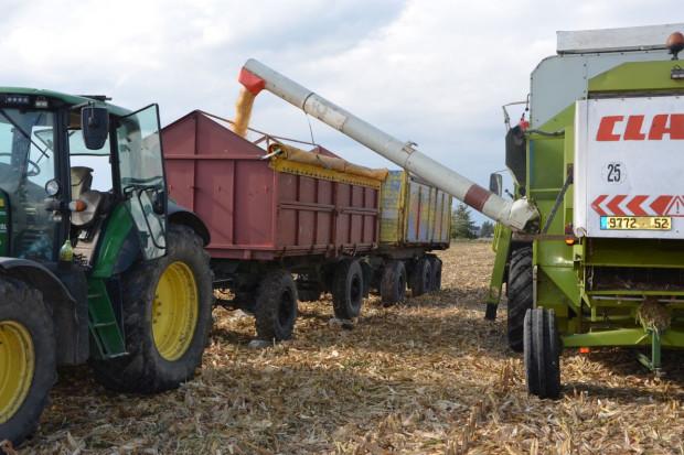 Plon i wilgotność 14 odmian kukurydzy w Skrzelewie